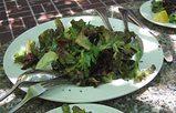tra_ガーデンサラダ